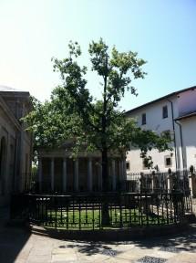 Tree of Gernika